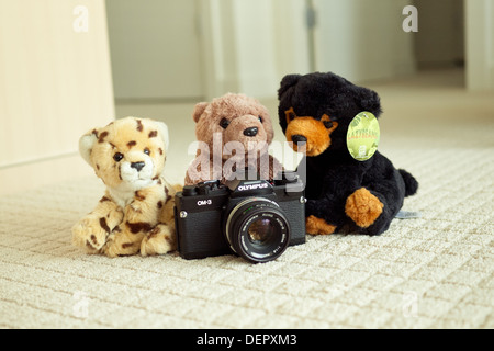 The world's cutest cheetah, brown bear and black bear pose with the legendary Olympus OM-3 film SLR camera. - Stock Photo