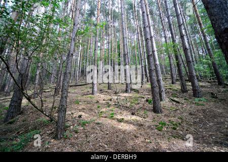 Palatinate forest, Germany - Stock Photo