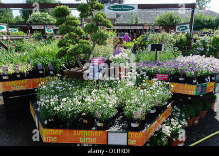 Unusual Summer Bedding Plants For Sale In A Garden Centre Scotland Uk  With Luxury  Outdoor Bedding Plants For Sale In A Garden Centre Uk Midsummer   Stock Photo With Easy On The Eye Garden Buildings Direct Voucher Codes Also Tea Garden In Sylhet In Addition Gifts For Gardens And Transform Your Garden As Well As In The Night Garden Cot Bedding Additionally Homes And Gardens Magazine Back Issues From Alamycom With   Luxury Summer Bedding Plants For Sale In A Garden Centre Scotland Uk  With Easy On The Eye  Outdoor Bedding Plants For Sale In A Garden Centre Uk Midsummer   Stock Photo And Unusual Garden Buildings Direct Voucher Codes Also Tea Garden In Sylhet In Addition Gifts For Gardens From Alamycom