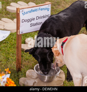 Dogs drinking at The All About Dogs Show at the Norfolk Showground, Norwich, Norfolk, England, Britain, Uk - Stock Photo