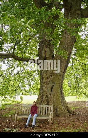Royal Botanic Gardens Kew in Richmond, London, England. Quercus castanaefolia - Stock Photo