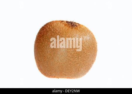 Chinese Gooseberry or Kiwifruit (Actinidia chinensis, Actinidia deliciosa) - Stock Photo