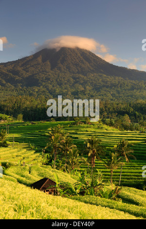 Indonesia, Bali, Central Mountains, Jatiluwih Rice Fields (UNESCO Site) with Mt. Pohen in the background - Stock Photo