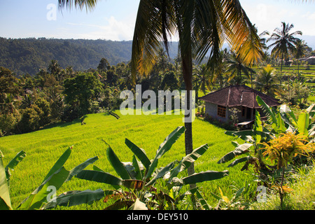 Indonesia, Bali, Central Mountains, Munduk, Rice Fields and mountain landscape around the popular hiking destination - Stock Photo