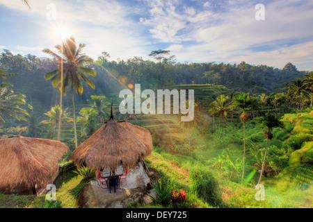 Indonesia, Bali, Ubud, Ceking Rice Terraces - Stock Photo