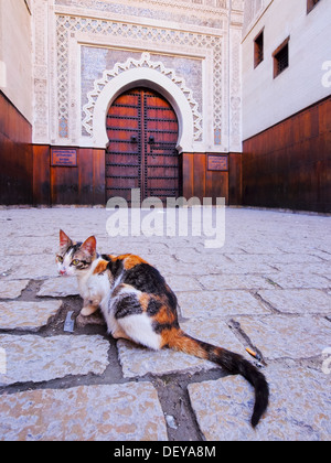 Cat in front of a typical moroccan door in the old medina of Fes, Morocco, Africa - Stock Photo
