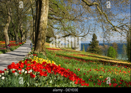 Flowers on a spring meadows, Insel Mainau, Konstanz, Baden-Württemberg, Germany - Stock Photo