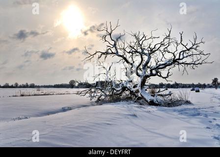 Tree in a snow-covered field in the Vier- und Marschlanden in Hamburg - Stock Photo
