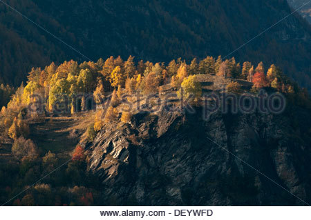 autumn colours, Valmalenco, Italy - Stock Photo