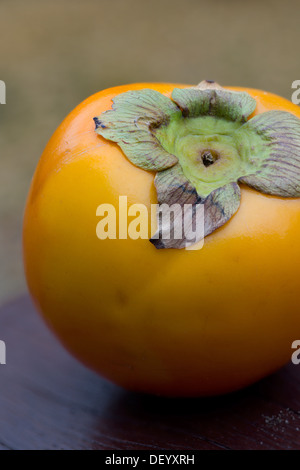 persimmon diospyros kaki or sharon fruit growing on tree marina stock photo royalty free. Black Bedroom Furniture Sets. Home Design Ideas