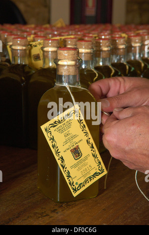 Baena, Olive oil. Núñez de Prado, Manual Tagging, Route of the Caliphate, Cordoba province, Andalusia, Spain - Stock Photo