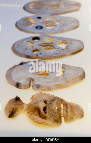 Plastination specimen of human head, parallel sections - Stock Photo