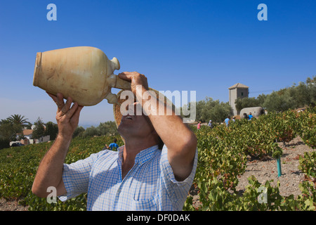 Montilla, Drinking during the harvest in august, Vintage in a vineyard in Montilla, Montilla-Moriles area, Cordoba - Stock Photo
