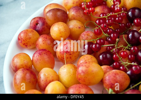 Berlin, Germany, plates with plums, cherries and currants - Stock Photo