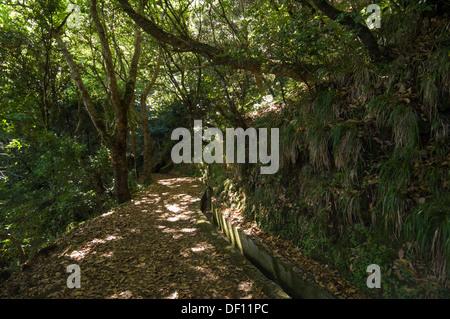 Shady path of the levada of Serra do Faial, between Ribeiro Frio and the Balcões belvedere, Madeira, Portugal - Stock Photo