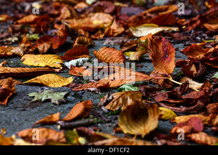 Autumnal leaves on forest path - Stock Photo