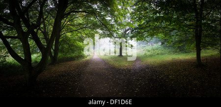 A panoramic view of early morning mist in Essex woodland. - Stock Photo