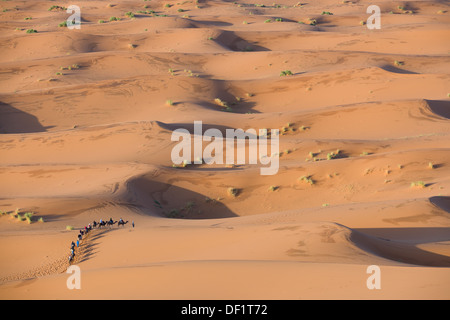 Looking down on to a tourist camel train amidst rolling sand dunes of the Sahara Desert at sunrise, Erg Chebbi, - Stock Photo