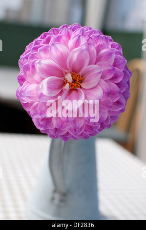 Decorative pink dahlia flower in home - Stock Photo