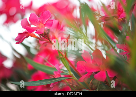 Photo of the pinky rural flowers - Stock Photo