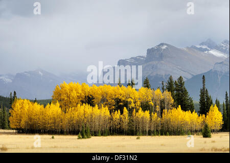 Autumn aspens and rainsquall in valley - Stock Photo