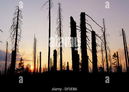 Dying of forests, Nationalpark Bavarian Forest, Germany - Stock Photo