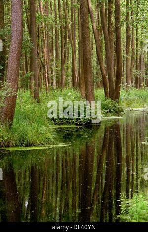 Biebrza National Park (Biebrzanski Park Narodowy). Swamps. Podlasie region. Poland - Stock Photo