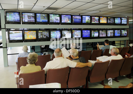 para mutuel betting at Greyhound dog racing at Fort Myers Naples dog track Florida - Stock Photo