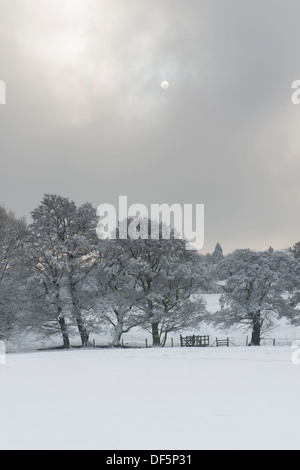 Winter scene in scenic countryside with full moon & grey clouds over line of bare trees & in quiet snow-covered - Stock Photo