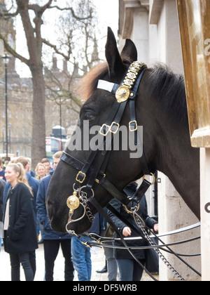 Queens Royal Horseguards Lifeguard Cavalry Horseguards Parade Whitehall London England - Stock Photo