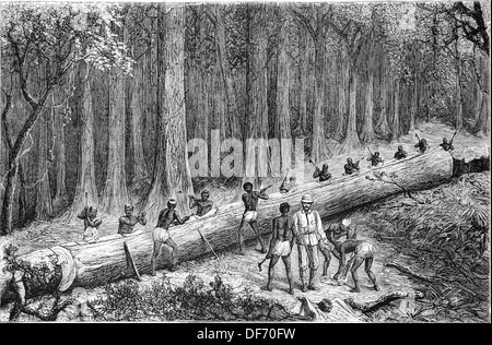 Africa. Stanley Expedition. Cutting Out teh New 'Livingstone Canoe'. Engraving by Com. 'La Ilustracion Nacional', - Stock Photo