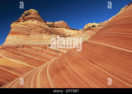 Coyote Buttes North, The Wave, sandstone formed by wind and water, Paria Wilderness Area, Arizona, USA - Stock Photo