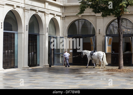 Lipizzans Stallion Returning to stables after training at the Spanish Riding School in Vienna - Stock Photo