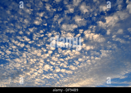 Altocumulus clouds against an early September blue evening sky. - Stock Photo
