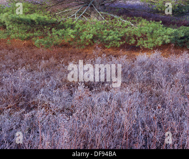 Frost field & Pine Bough - Stock Photo
