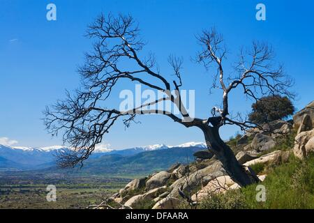 Overview of Sierra de Gredos with snow covered, from Cerro del Berrueco, archaeological site in Salamanca province, - Stock Photo