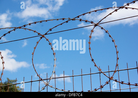 Coiled razor sharp barbed wire on fence against blue sky - Stock Photo