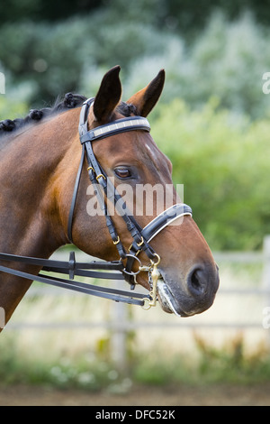 A portrait of a horse standing outside wearing a bridle - Stock Photo