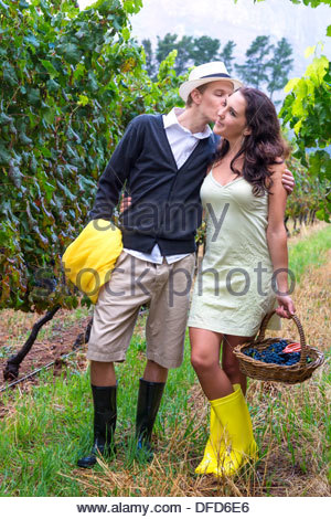 Couple in late twenties collecting grapes in a vineyard during a light rain, Winelands, Western Cape, Stellenbosch, - Stock Photo