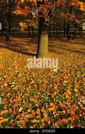 Autumn leaves under the oak tree in Praski Park, Warsaw, Poland. - Stock Photo