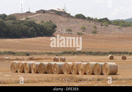 Straws seen on a field in the Spanish Balearic island of Mallorca. - Stock Photo