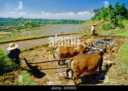 In the rice fields - Stock Photo