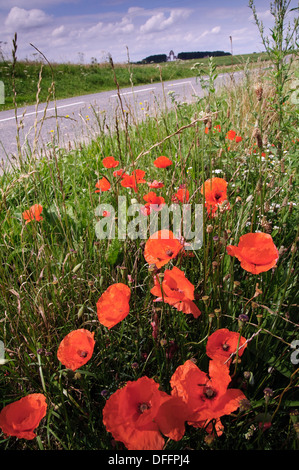 Poppies at the roadside near the Theipval Memorial on the Somme battlefield in France - Stock Photo