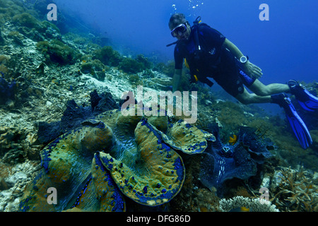 Giant Clam (Tridacna gigas) and a scuba diver, Raja Ampat, West Papua, Indonesia - Stock Photo