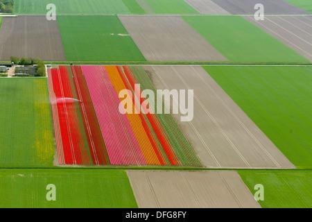 Field irrigation, tulip fields, aerial view, Zeewolde, Flevoland, The Netherlands - Stock Photo