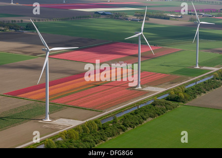 Wind turbines, tulip fields, aerial view, Zeewolde, Flevoland, The Netherlands - Stock Photo