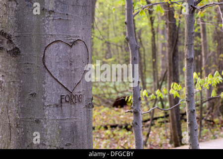 A tree in the forest with a heart and the word forever craved on it - Stock Photo