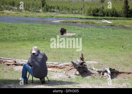 photographer taking pictures of bison in Yellowstone Park - Stock Photo