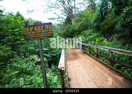 Merging of trails, the Kuilau and Moalepe trail begin near Wailua´s Keahua Arboretum and travels up to views of - Stock Photo