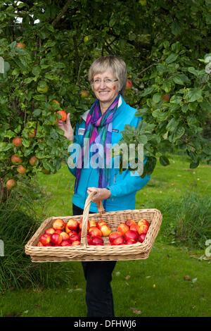 Arnside, Silverdale, UK. 5th October, 2013. Mrs Barbara Henneberry Communications and Funding Officer, a gardener - Stock Photo